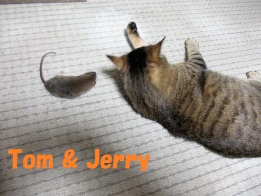 20161225_トムとジェリー