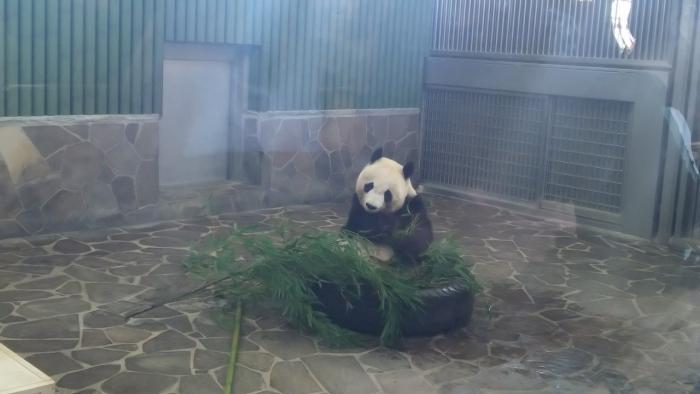 王子動物園 (13)