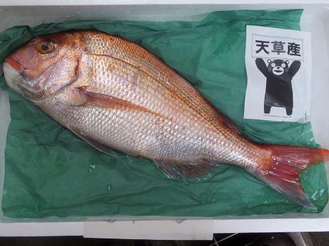 002天然鯛