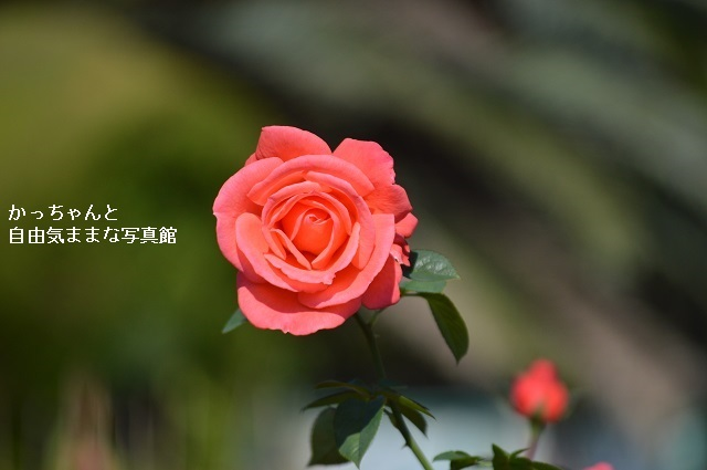 DSC_4676.jpg