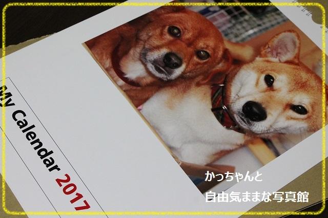 IMG3301_.jpg