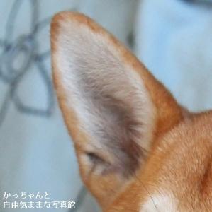 IMG_3510 - コピー (2)