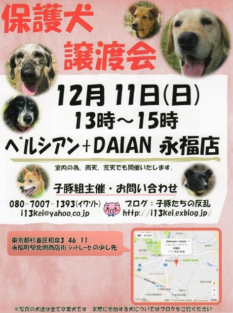 譲渡会のお知らせ(20161211)