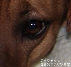 柚希 (5)