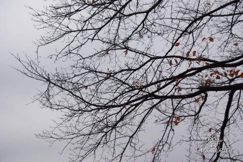 棚林の冬の木立