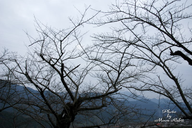 市民の森の師走の木々