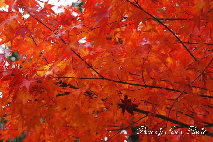 鈍川運動公園の紅葉