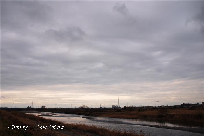 冬の加茂川