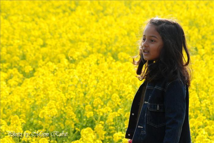 菜の花と外国人のこども 見奈良の菜の花畑