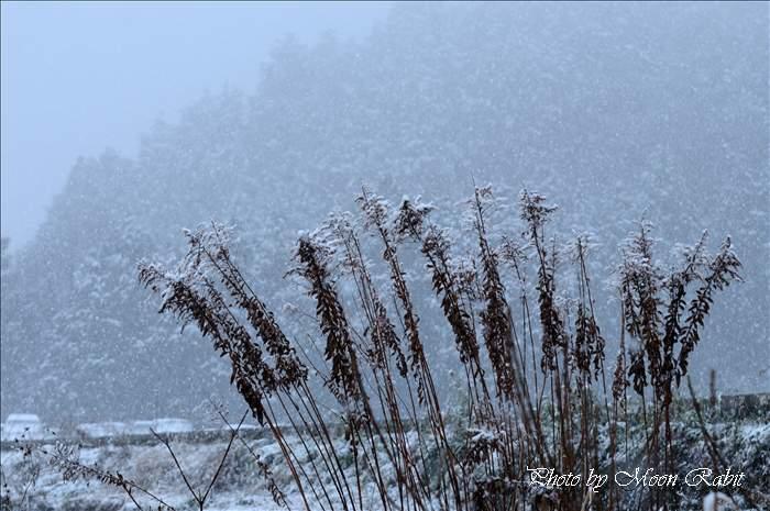 雪と枯れ草