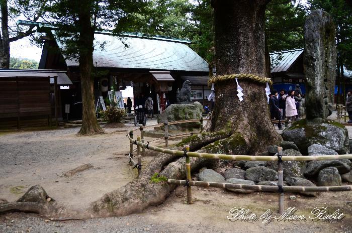 伊曽乃神社のクスノキ 西条の巨樹 愛媛県西条市中野甲1649