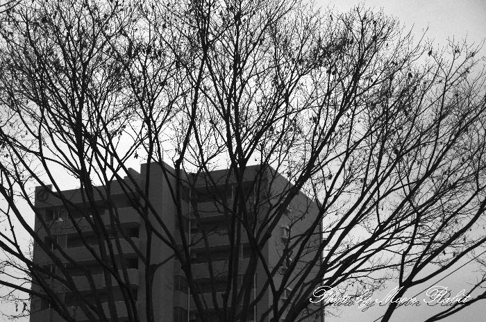 冬木とマンション ポレスター神拝アクアステージ