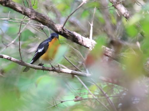 NN7A0128森林植物園森林植物園_mugimaki_convert_20161029192556