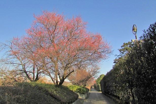 oomiyadaini170121-102.jpg