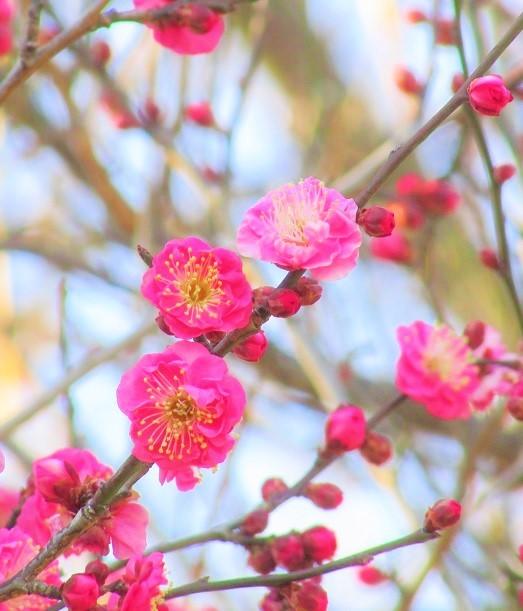oomiyadaini170121-107.jpg