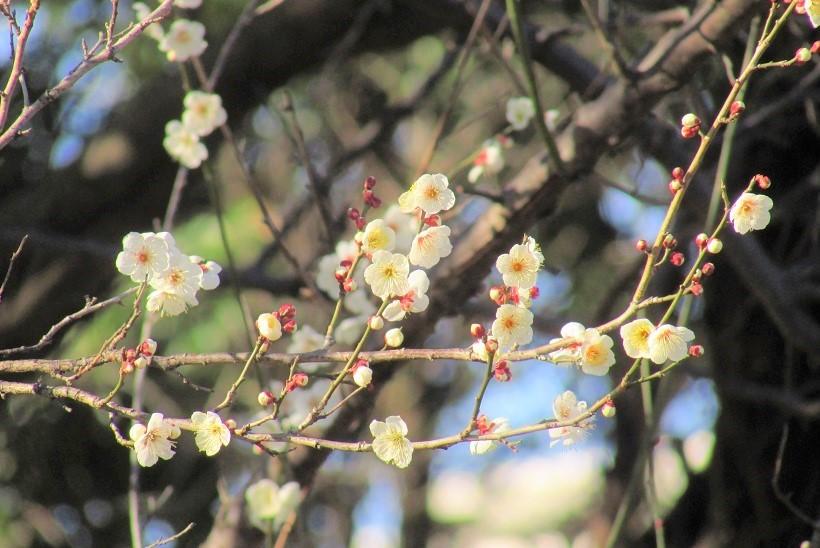 oomiyadaini170121-110.jpg