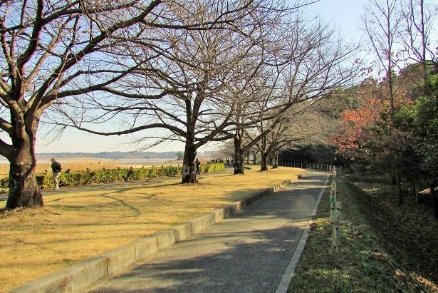 tataranuma170107-132.jpg
