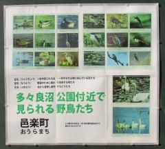 tataranuma170107-202.jpg