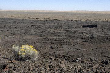blog TAKE 103 Jordan Craters, Rabbitbush, OR_DSC0057-9.9.07.jpg