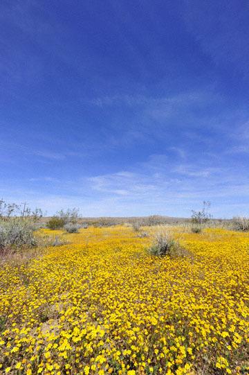 blog 6 Mojave to Death Valley, 395S Kramer Junction, Goldfields, CA_DSC5656-4.3.16.jpg