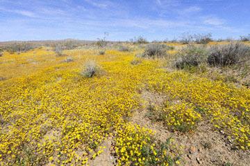 blog 6 Mojave to Death Valley, 395S Kramer Junction, Goldfields, CA_DSC5654-4.3.16.jpg