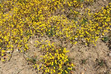 blog 6 Mojave to Death Valley, 395S Kramer Junction, Goldfields, CA_DSC5662-4.3.16.jpg