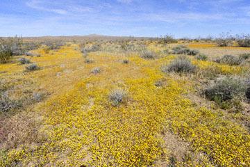 blog 6 Mojave to Death Valley, 395S Kramer Junction, Goldfields, CA_DSC5661-4.3.16.jpg