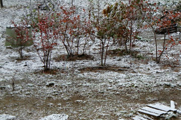 blog CP30 Snow, Ibaraki 2_DSCN3378-11.24.16.jpg