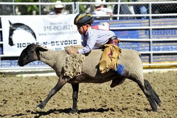 blog (6x4@300) Yoko 35 Gold Country Rodeo, Mutton Busting 3 (#25), CA_DSC7138-4.23.16.(1).jpg