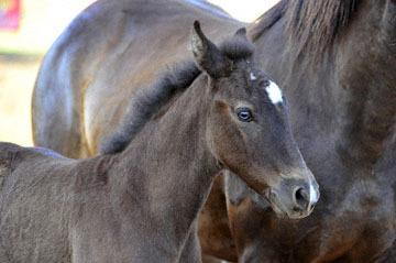blog (6x4@300) 101 Marysville Stampede, Horse Mom & Baby_DSC3473-5.28.16.(3).jpg