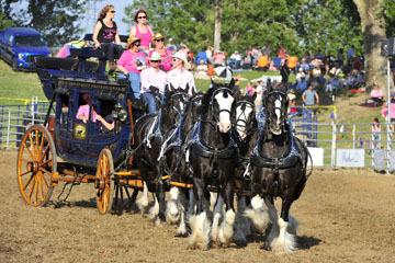 blog (6x4@300) Yoko 100 Marysville Stampede, Express Ranches Clydesdales_DSC3286-5.28.16.(2).jpg