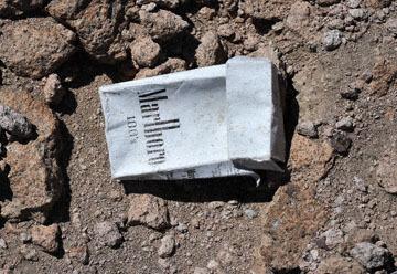 blog 9 Mojave to Death Valley, Death Valley, Phacelia, Rd. 374 Beatty, NV_DSC1884-4.5.16.(1).jpg