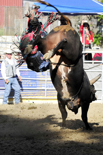 blog (4x6@300) Yoko 35 Gold Coutry Rodeo, Bull Riding 4, Jordan Spears (NS Harris Ranch) 2_DSC7891-4.23.16.(1).jpg