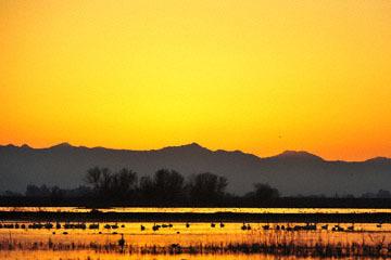 blog (6x4@300) Yoko 195 Sunset, Merced NWR, CA_DSC5317-12.28.16.(2).jpg