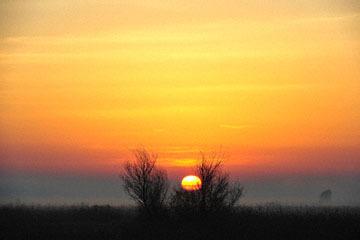 blog (6x4@300) Yoko 193 Sunrise, Merced NWR_DSC5053-12.28.16.(1) copy.jpg