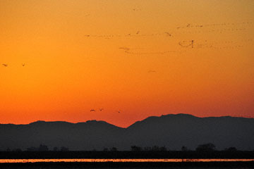 blog (6x4@300) Yoko 195 Sunset, Merced NWR, CA_DSC5363-12.28.16.(2).jpg