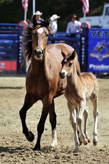 blog (4x6@300) Yoko 39 D3S Gold Country Rodeo, Saddle Bronco, Mom & Baby 2_DSC9268-4.24.16.(2).jpg