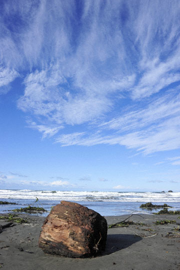 blog 191 Seaside Beach, Mendocino Land Trust, CA_DSC4288-12.17.16.jpg