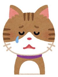 cat3_cry.jpg