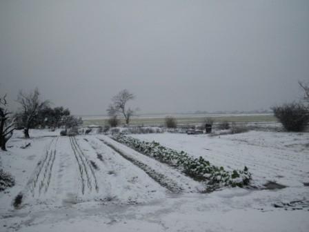 初積雪170111c