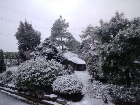 初積雪170111b