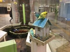 小鳥の広場