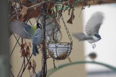 野鳥の羽ばたき