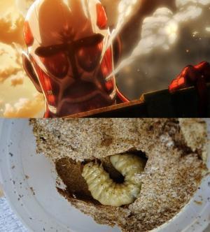 幼虫vs人間_convert_20161105211717