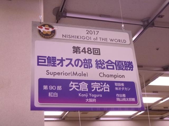 全日本錦鯉品評会