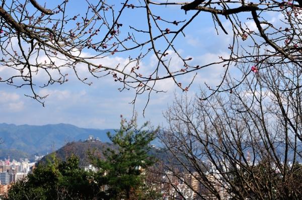 8総合公園17.01.12