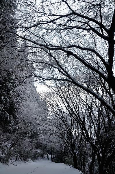 1白糸の滝17.01.22