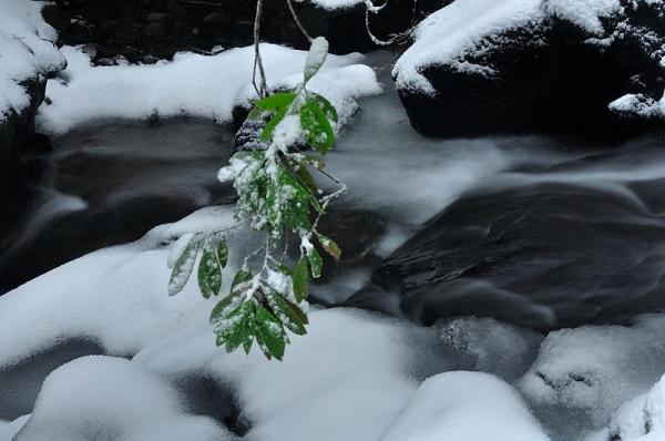 4白糸の滝17.01.22