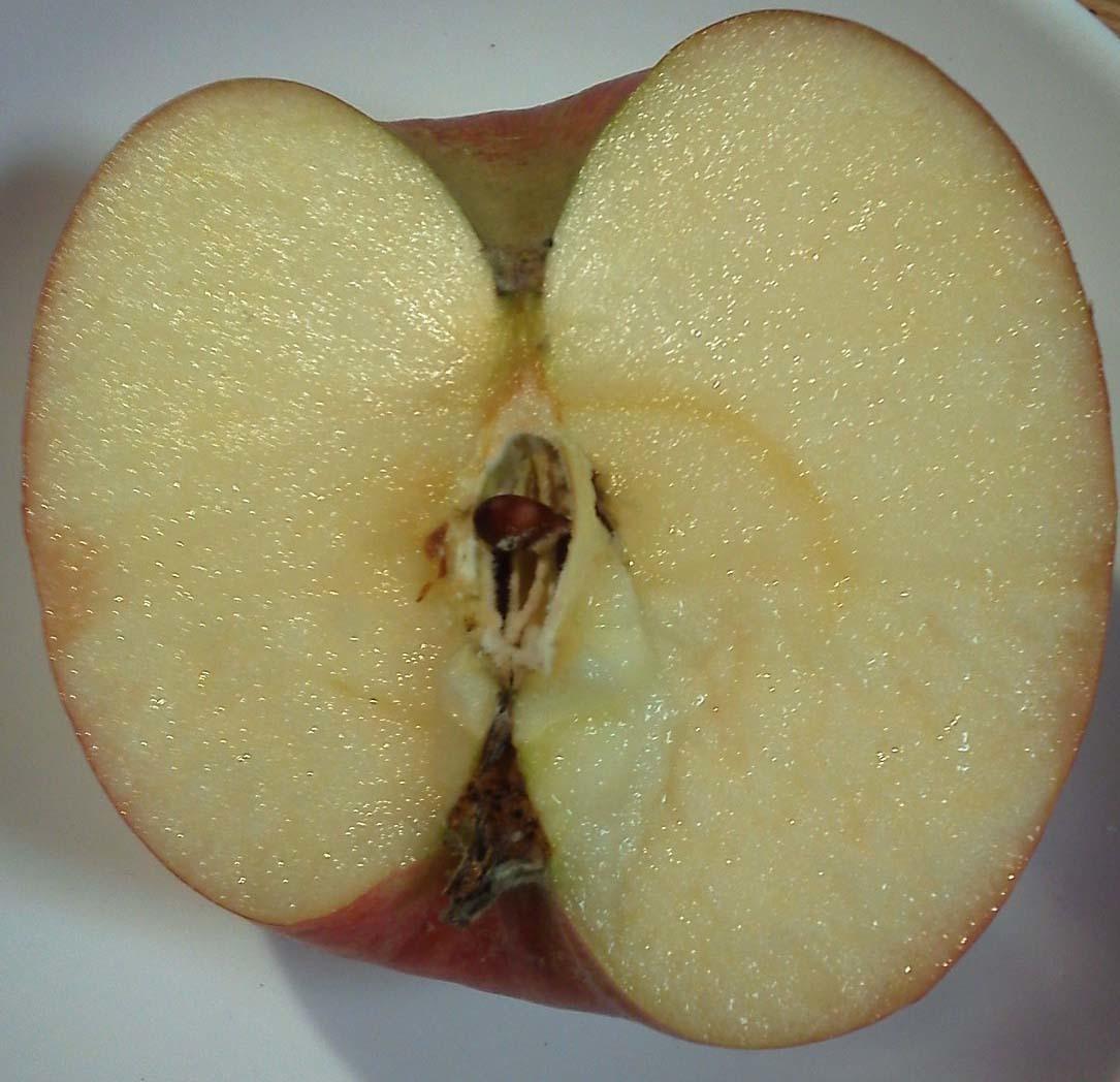 2016dec6リンゴ切り口回転トリミングK0120246