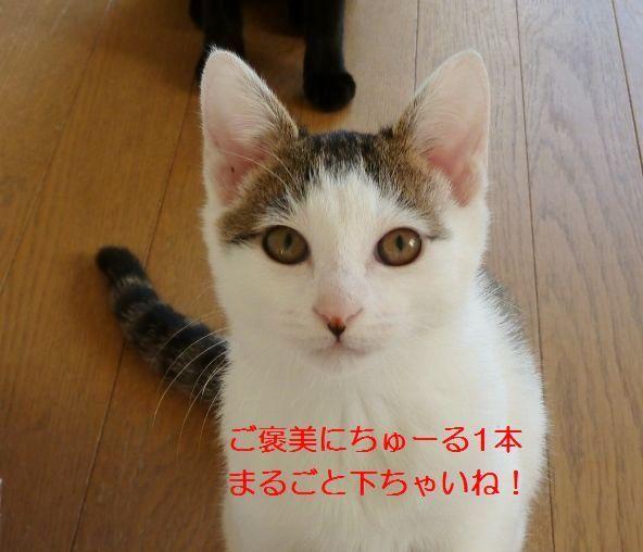P1330821.jpg